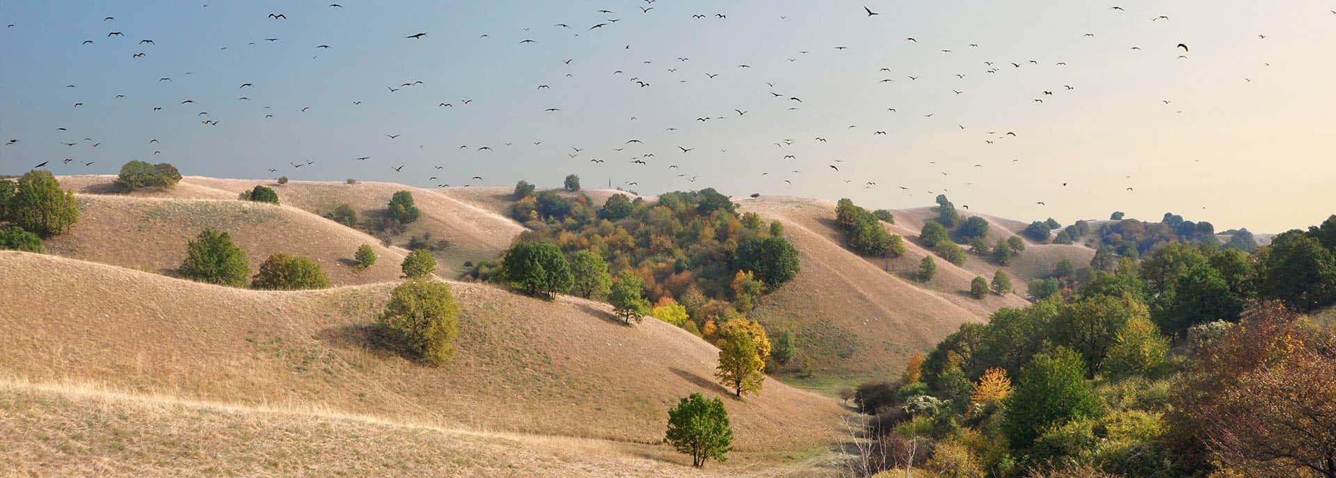Deliblatska Peščara - Vojvodina